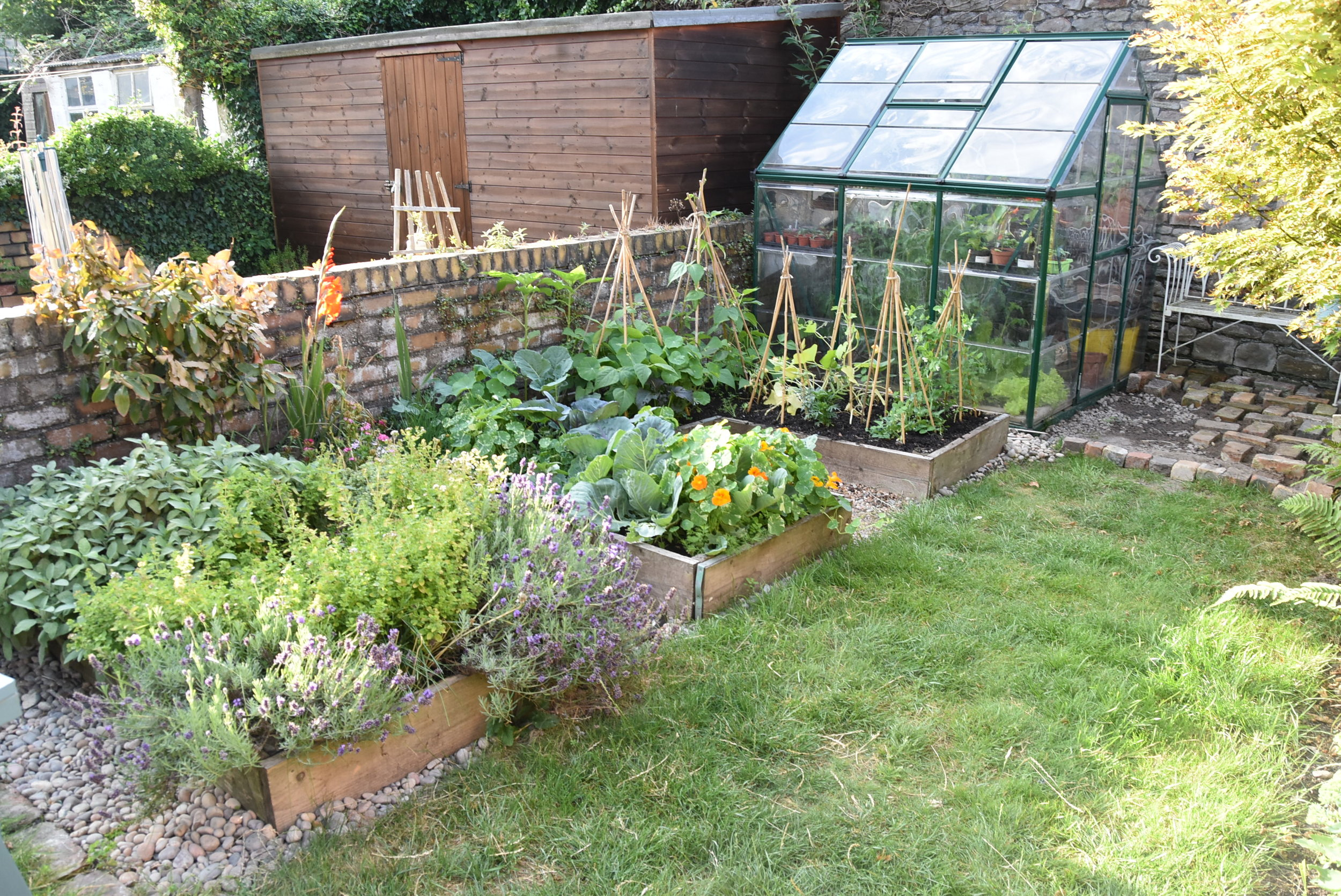 Our urban garden - early summer