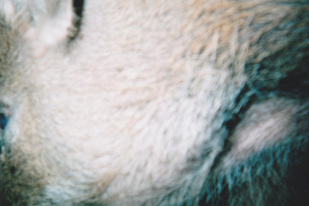 Wild Boar Photos 07.jpg