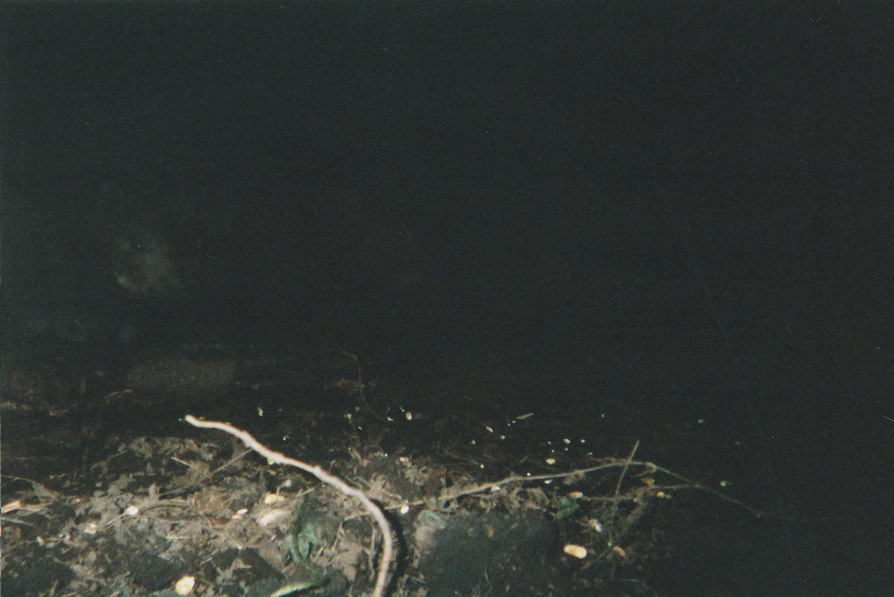 Wild Boar Photos 20.jpg