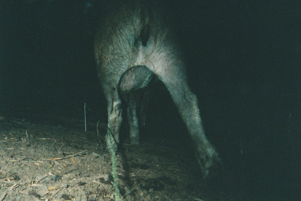 Wild Boar Photos 34.jpg
