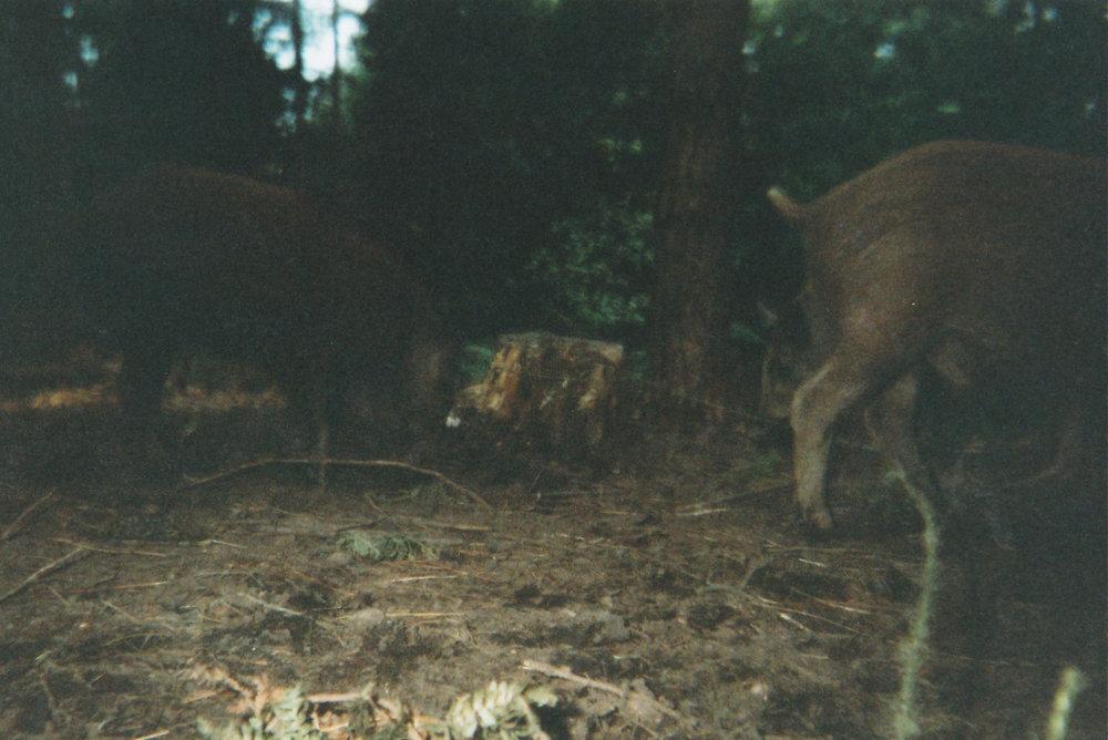 Wild Boar Photos 35.jpg