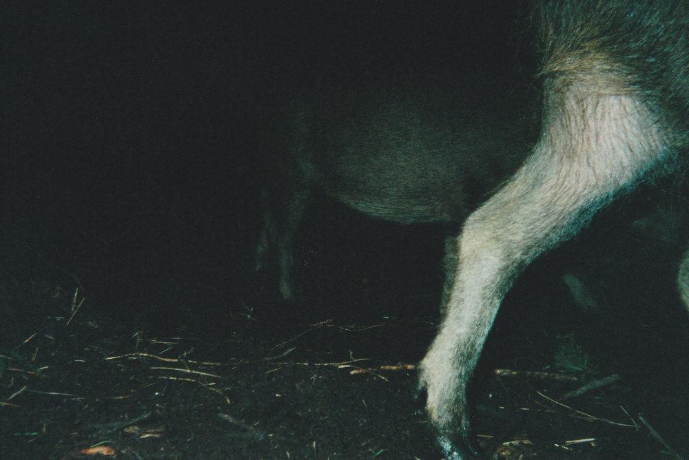 Wild Boar Photos 37.jpg