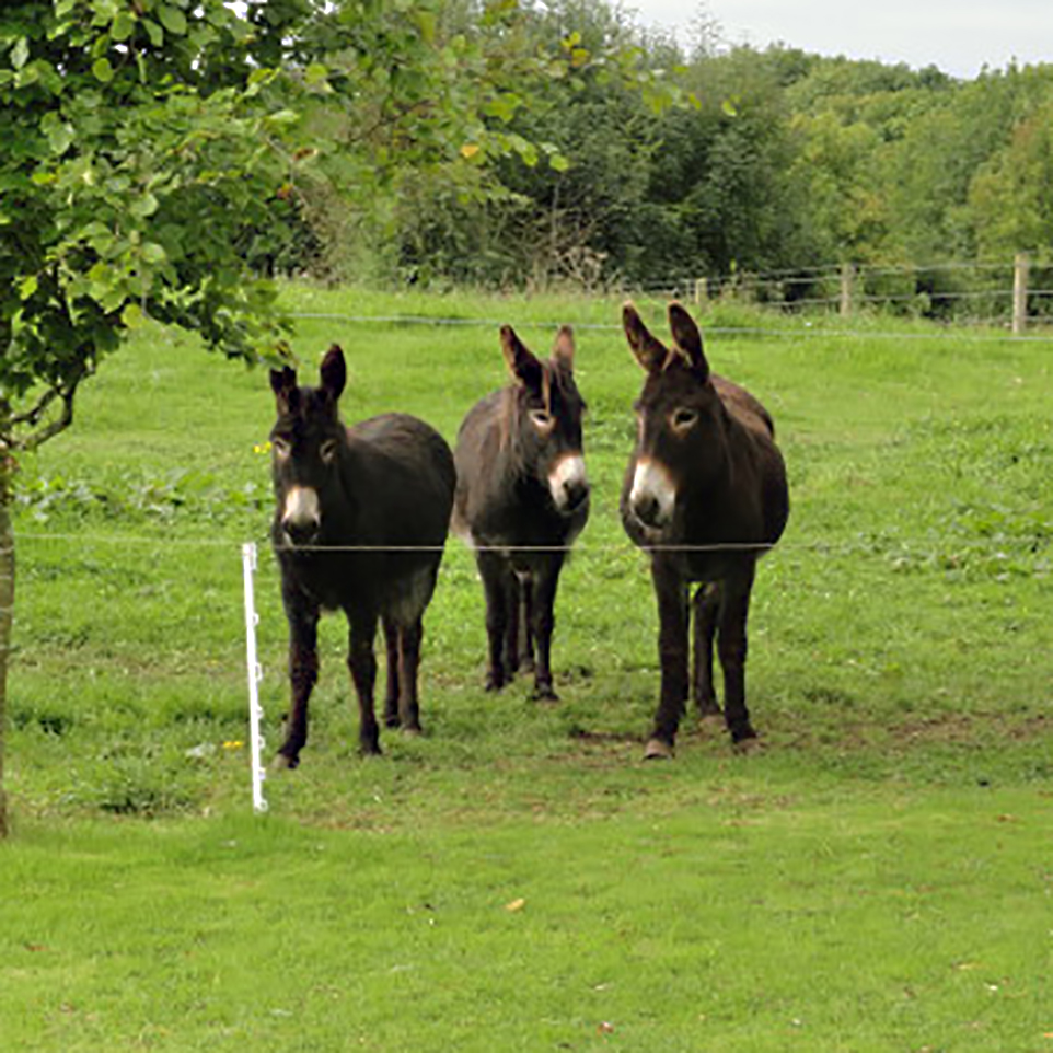 Three girls_rev.jpg