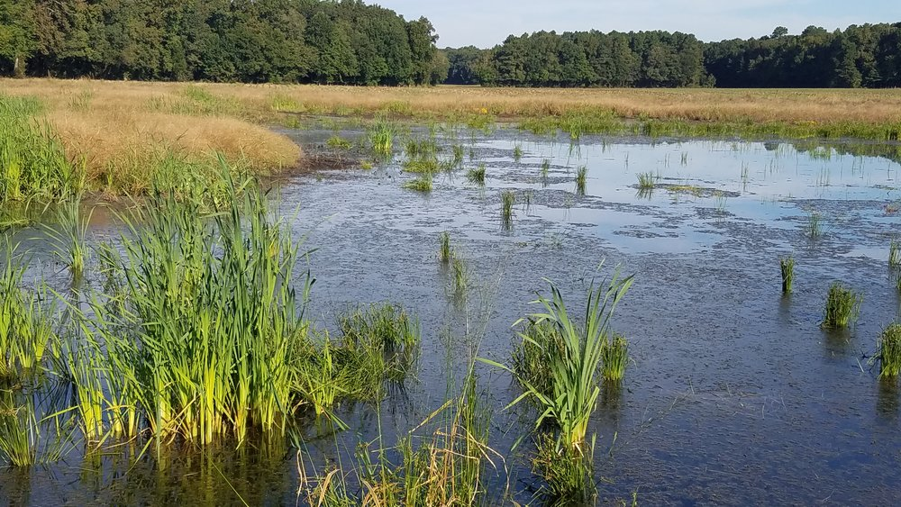 Restored wetland funded through the CREP program