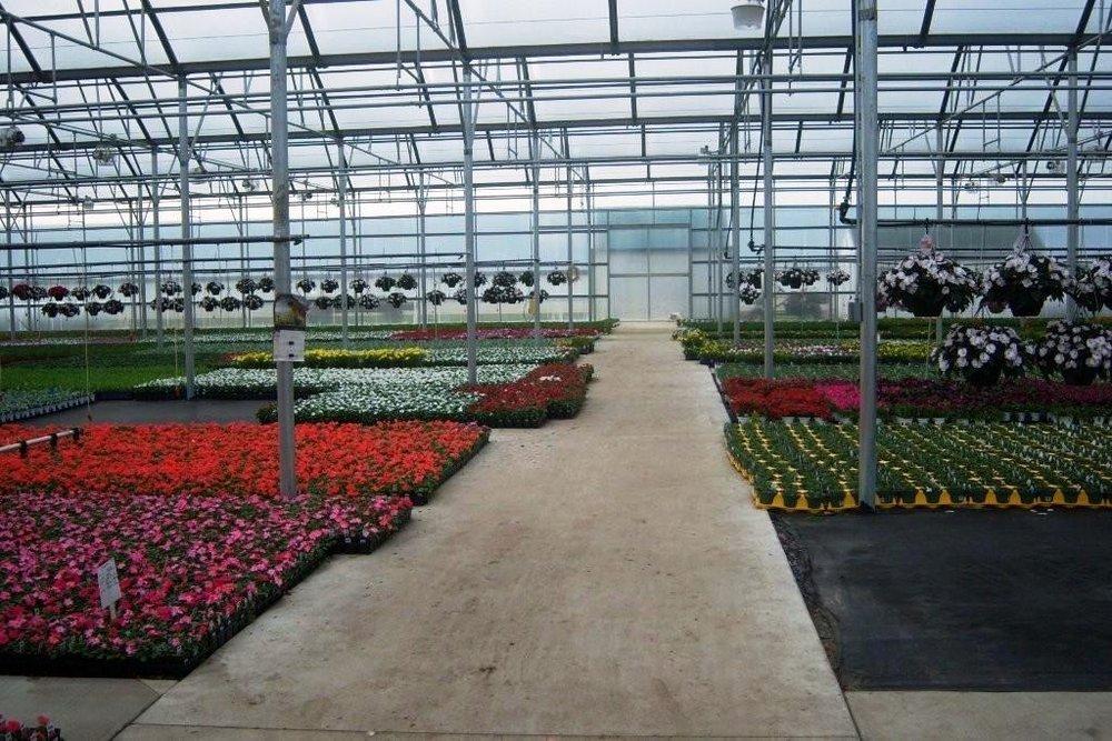 Flowers 146.jpg