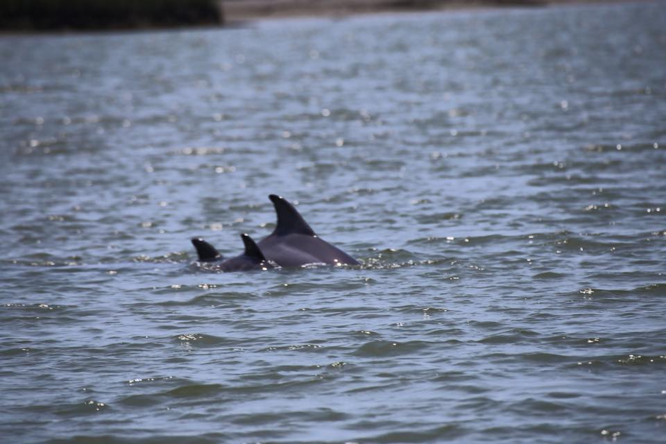 Folly Beach Dolphin Tours