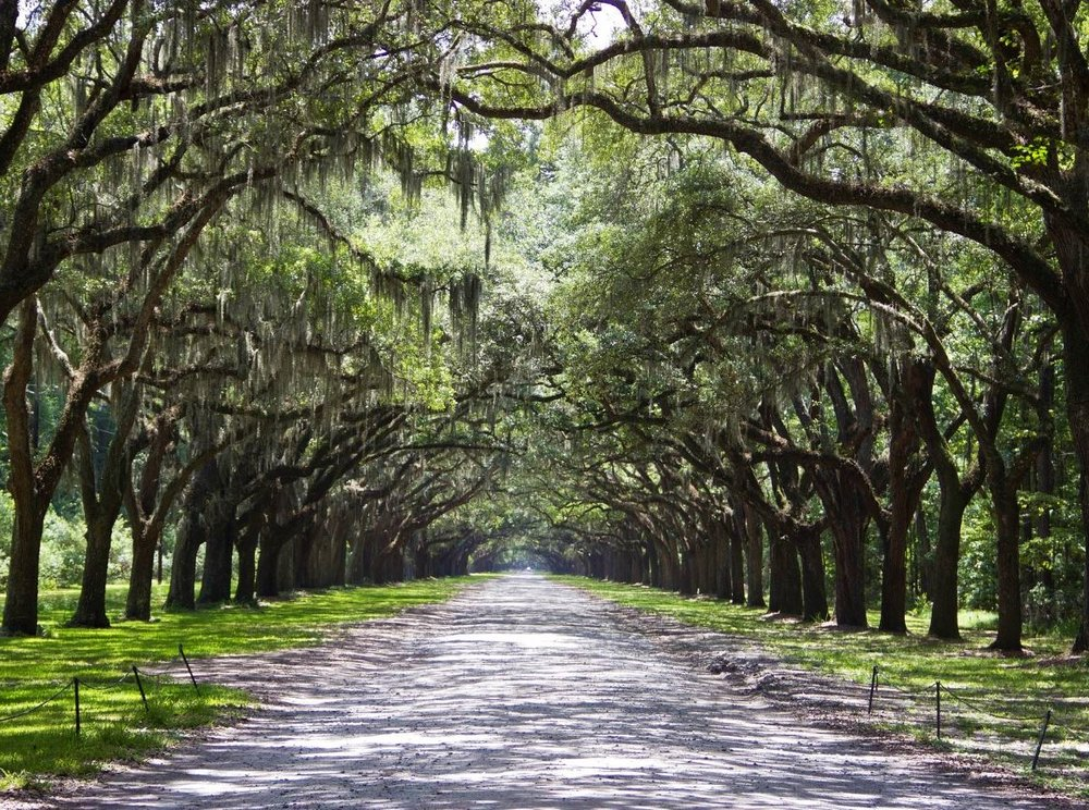 tress-lined-road-savannah.JPG