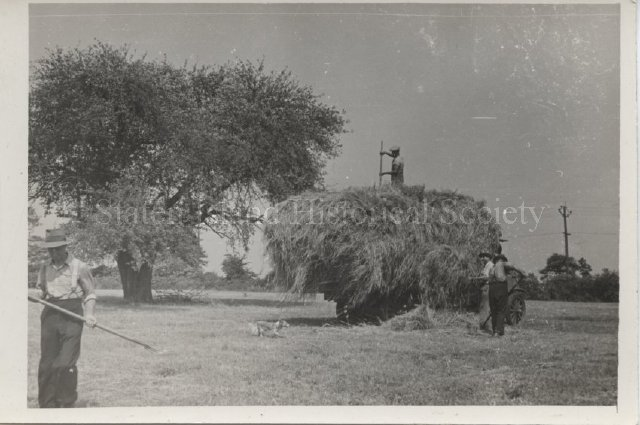 ca. 1935-1940;  View of haying at the Decker Farm in New Springville, Staten Island.