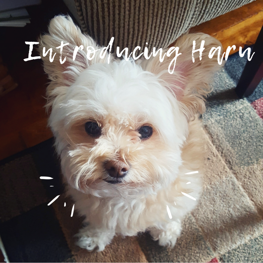 Introducing Haru - OH MY MARR