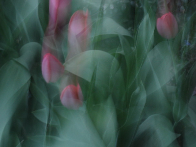 photo by naomi rose