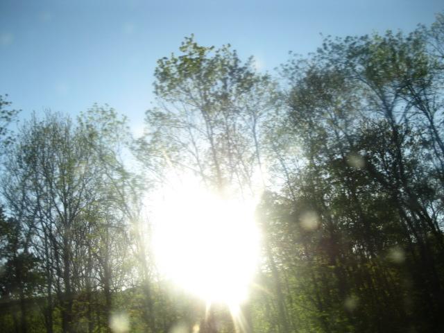 Photo, heart-light through trees copy.JPG