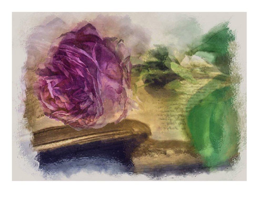 BOOK DEVELOPMENT / NAOMI ROSE