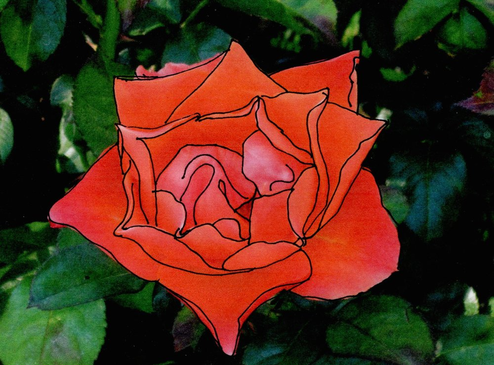 #4: Red rose, with definition