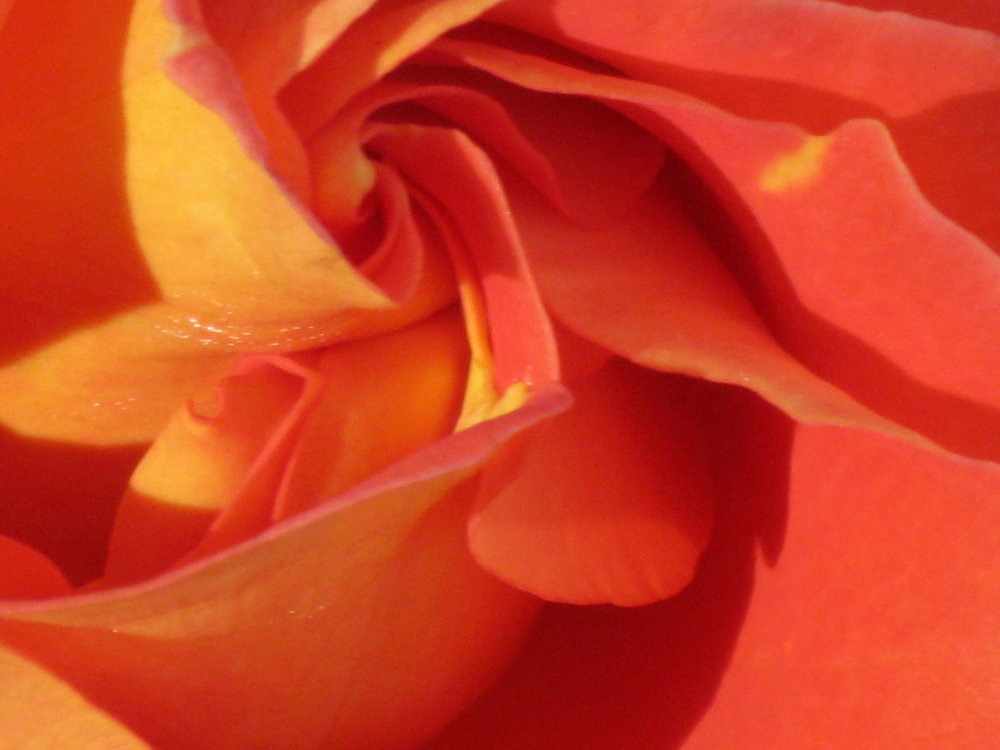 """How did the rose ever open its heart and give to the world all its beauty? It felt the encouragement of light against its being, otherwise we all remain too frightened."" — Hafiz -"