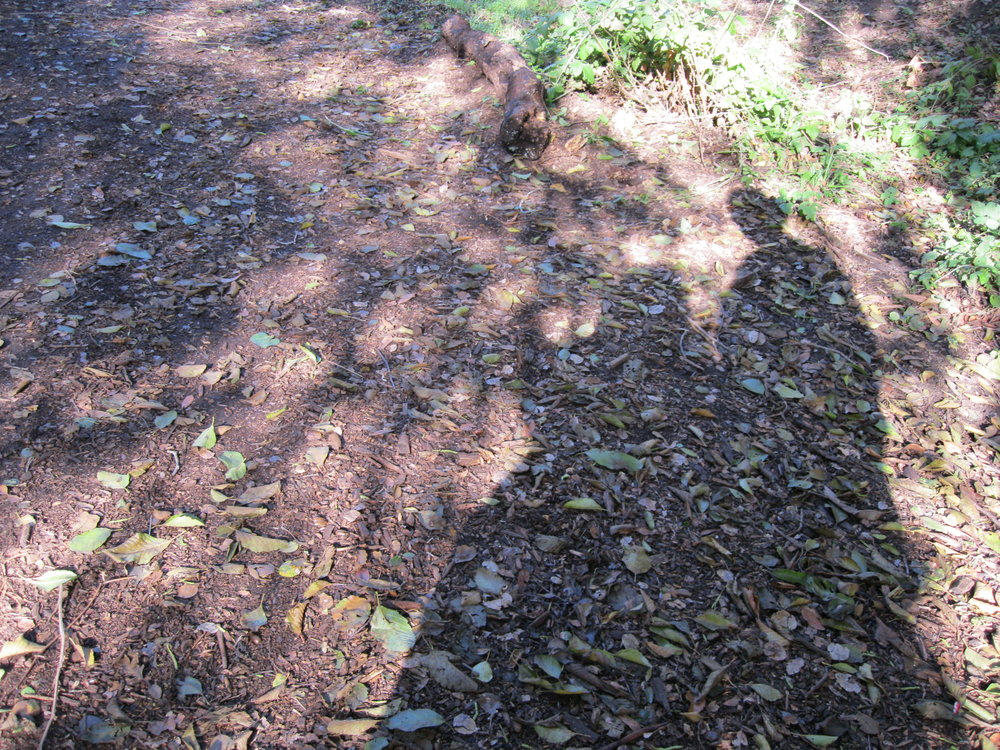 Shadows of photographer on the nature path copy.JPG