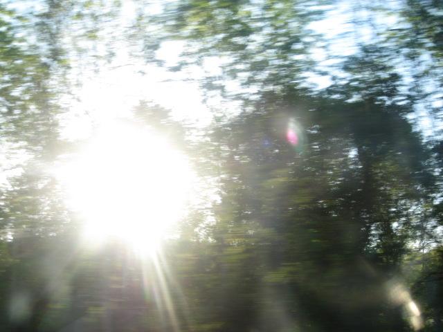 Burst of light through trees copy.JPG