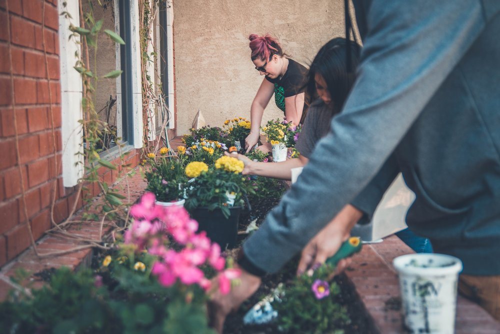 Image: Three people planting flowers. Photo: Photo by  NeONBRAND  on  Unsplash