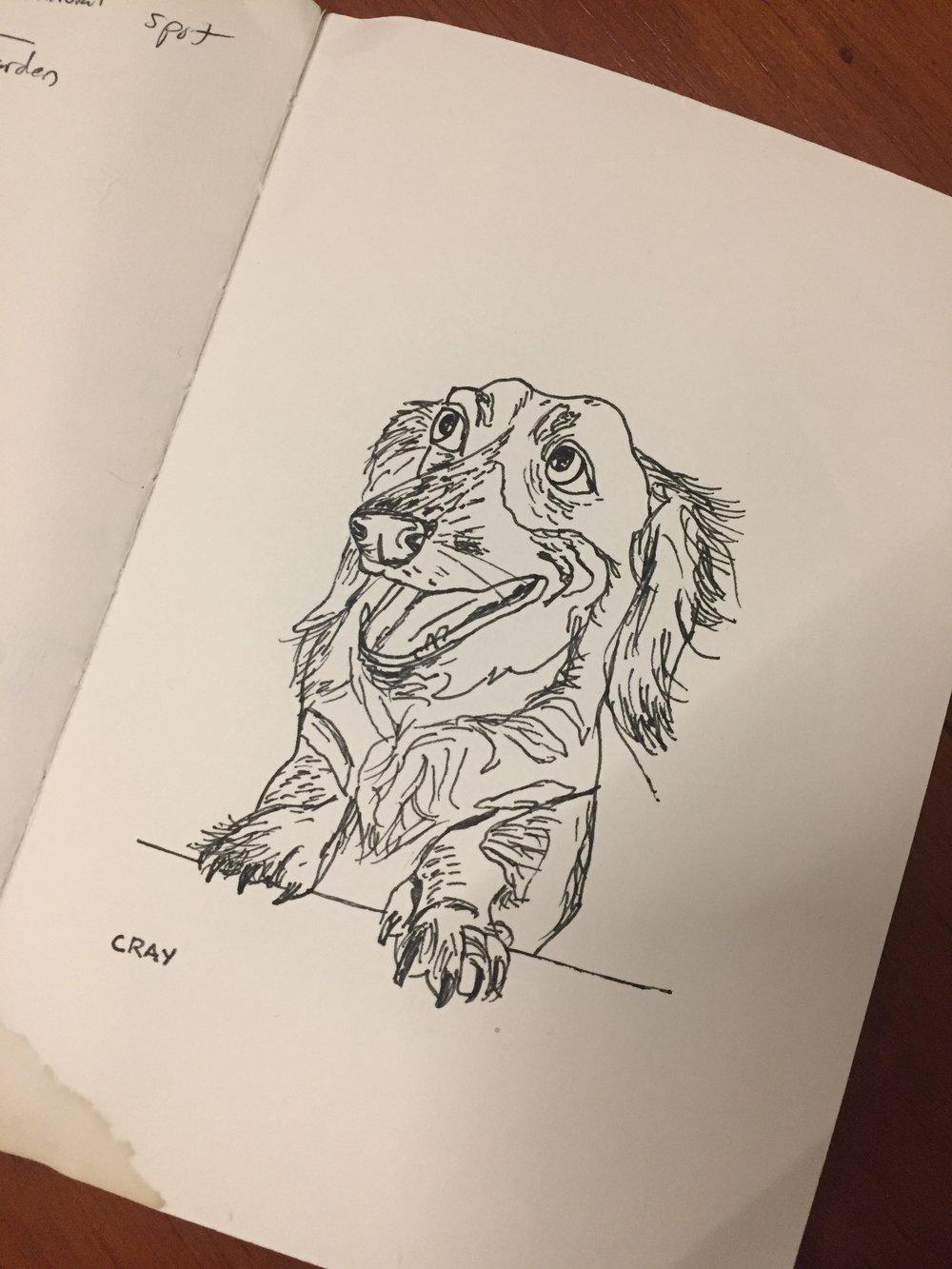 Crayola.  Quick sketch. My always happy dachshund.