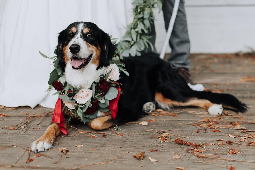 +Raleigh +Vineyard +Wedding +Venue -+Wedding +Photographer +North Carolina - +Raleigh +Wedding - +Dog +in +Wedding -3342.jpg