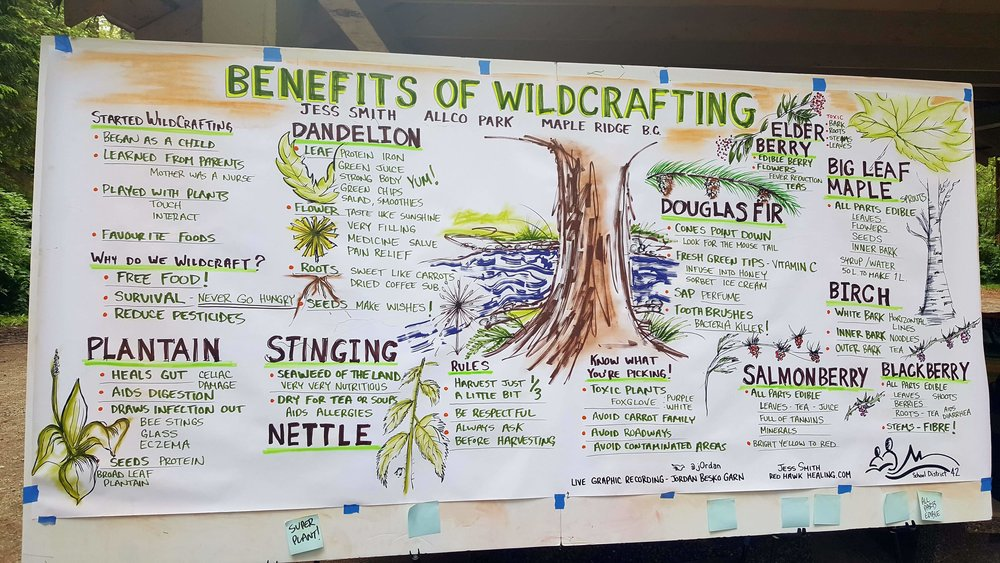 BENEFITS OF WILDCRAFTING - JESS SMITH,  RED HAWK HEALING   Live graphic recording for  Maple Ridge Environmental School  ( School District 42 ) at Allco Park, Maple Ridge, B.C. June 15, 2018. - 80 kids, teachers, principal in the audience during the presentation.   Format: 4' x 8' presentation paper