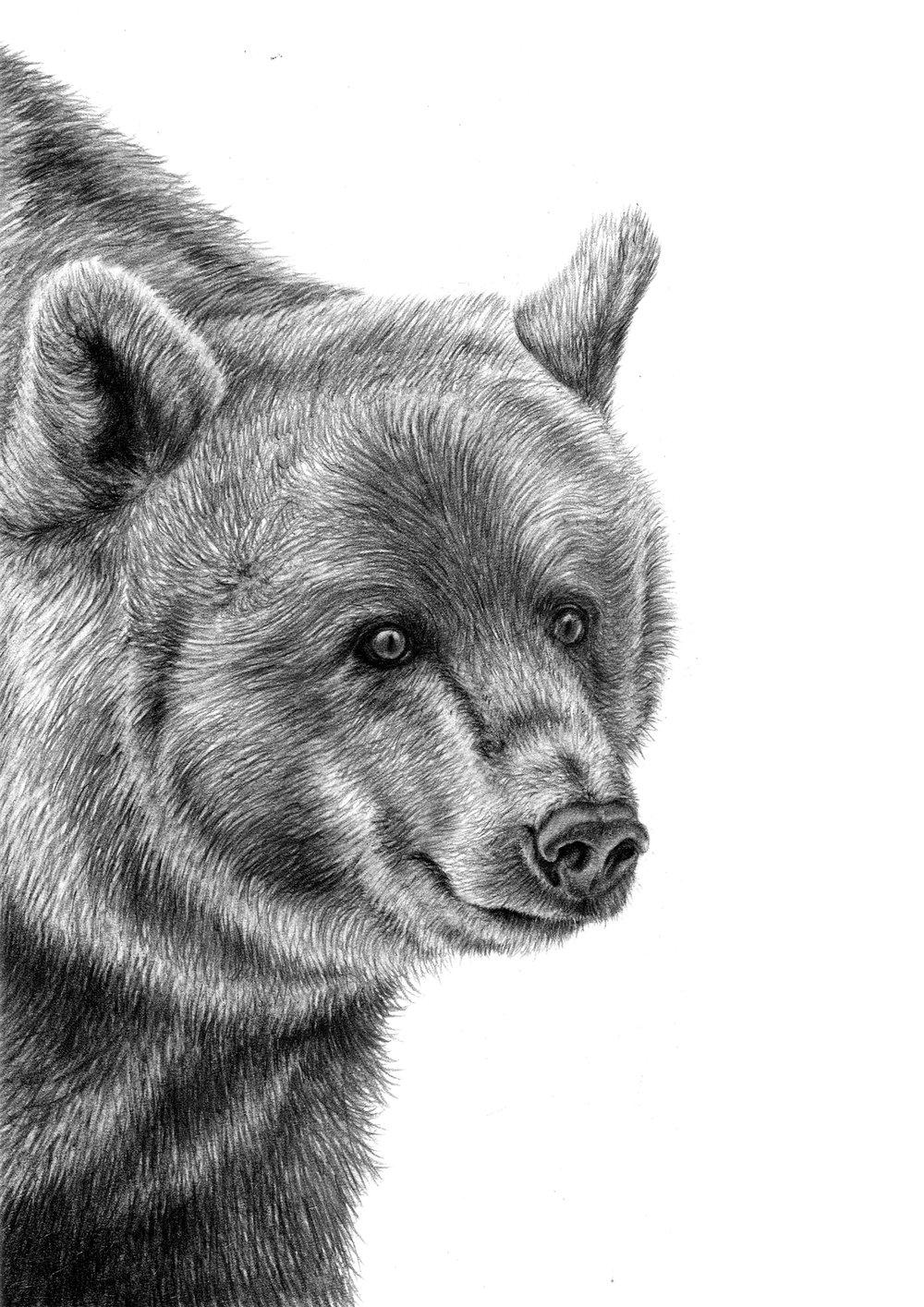bear finished.jpg