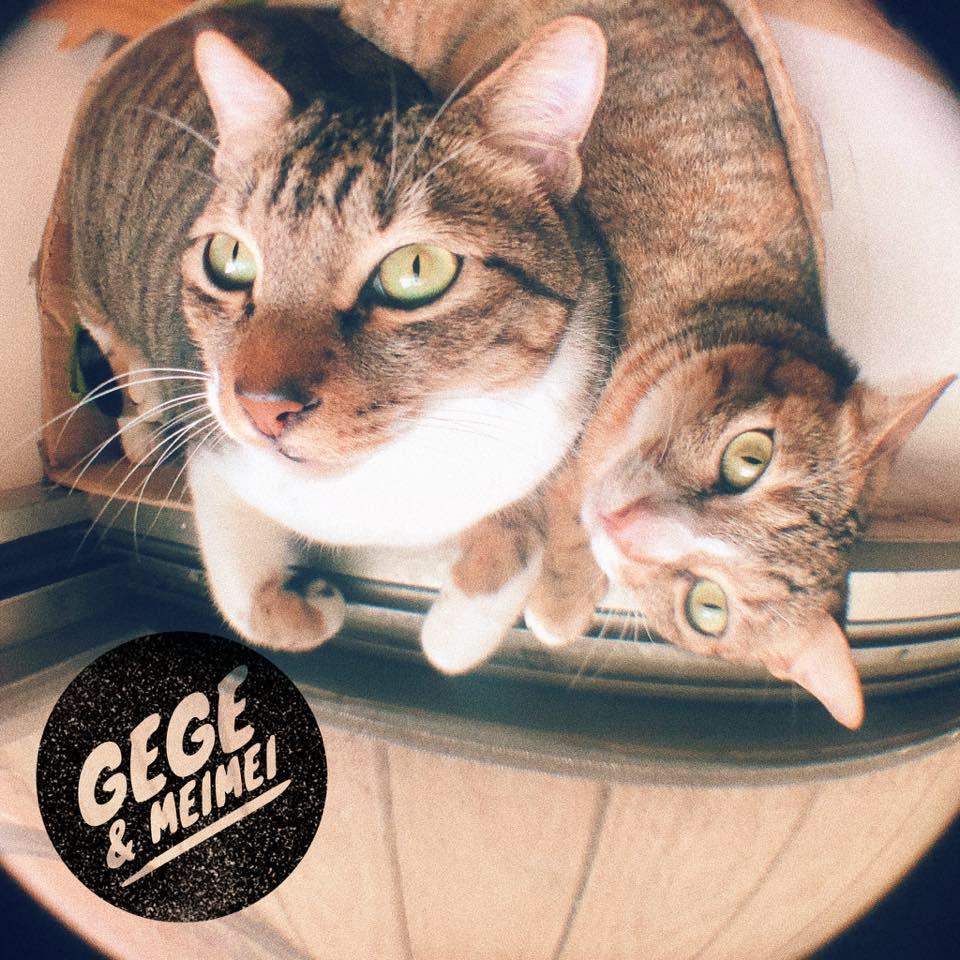 兩隻貓的貓奴