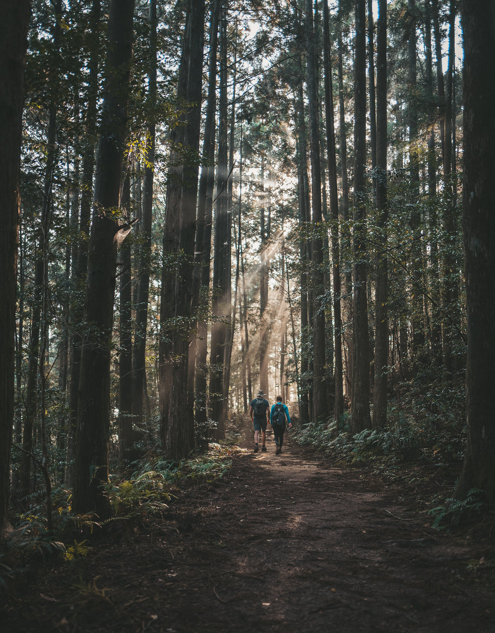 stock-photo-a-walk-in-the-woods-236262727.jpg