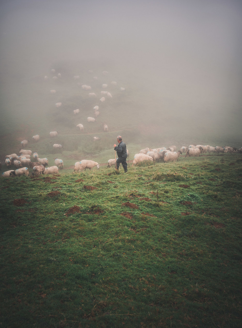 A farmer tends his flock in the early morning
