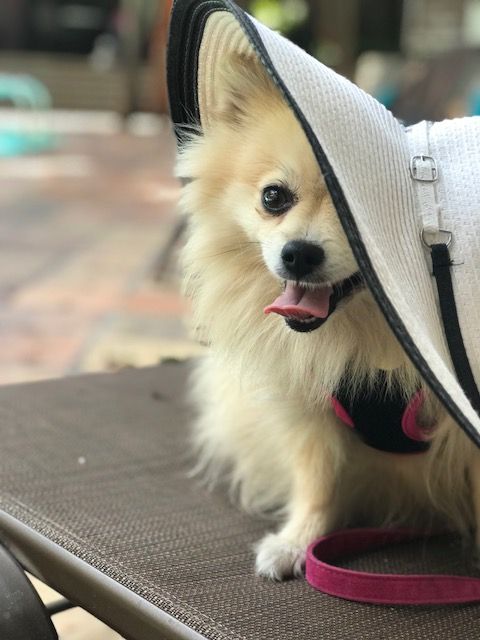 The latest in pup fashion near Melrose -