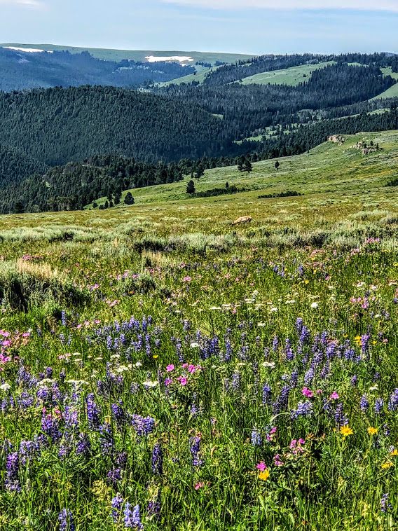 This was taken while hiking on a mountain meadow in July by one of our campers.