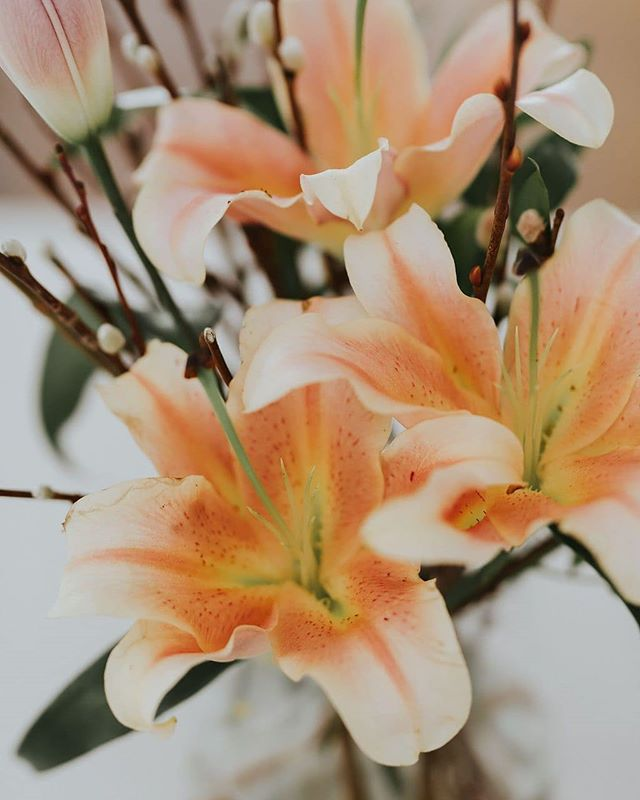 Repeat after me: SSSssssppppprrriiinnnngggg 🌸🌻⚘🌷🌹! Si on y pense tous vraiment fort... peut-être que demain on pourrait avoir un beau 15°C doux de printemps non!? 🤔 • • • • Photographer: @robbie_photographe  Floral arrangement: @oh.fleurs • • • • • #plato #orderplato #mtlflorist #mtlflowers #montrealflorist #spring #spring2019 #floraldesign #floralinspiration #floralarrangements #floralarrangement #flower_daily #weddingflowersdecor #floralinspo #2019bride #bride2019 #slowandsimpledays #everysquareastory #lovelysquares #seekbeauty #blossom🌸 #montreality #floralartistry #floralartist #floralartists #springwedding #springweddings #springweddingflowers