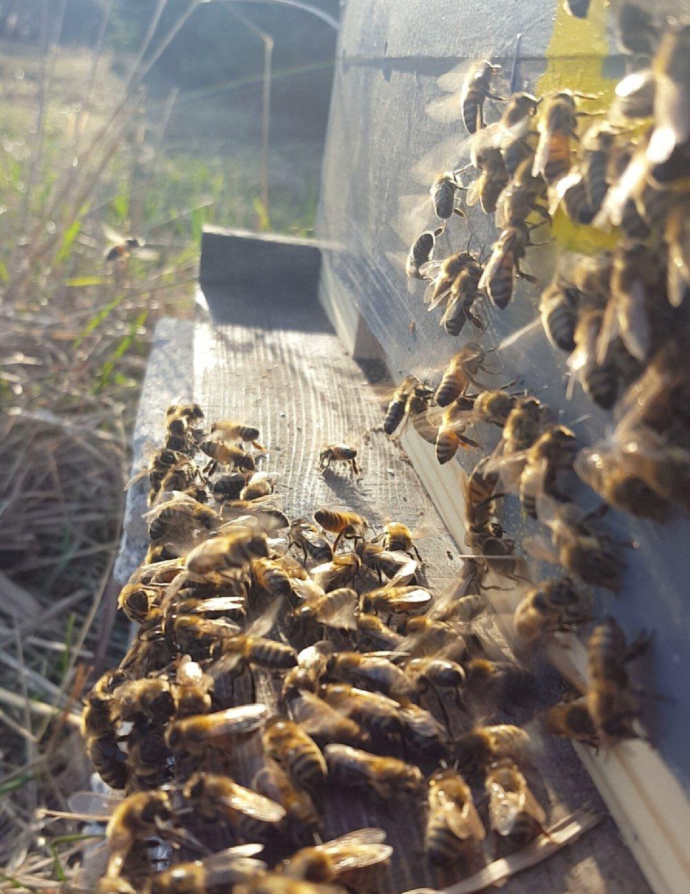 蜜蜂+在+前面+蜂巢.jpg