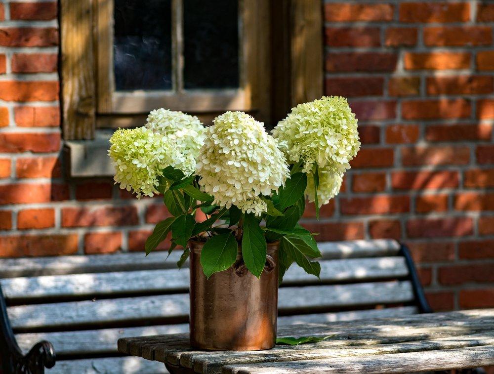 flowers-3029416_1920.jpg