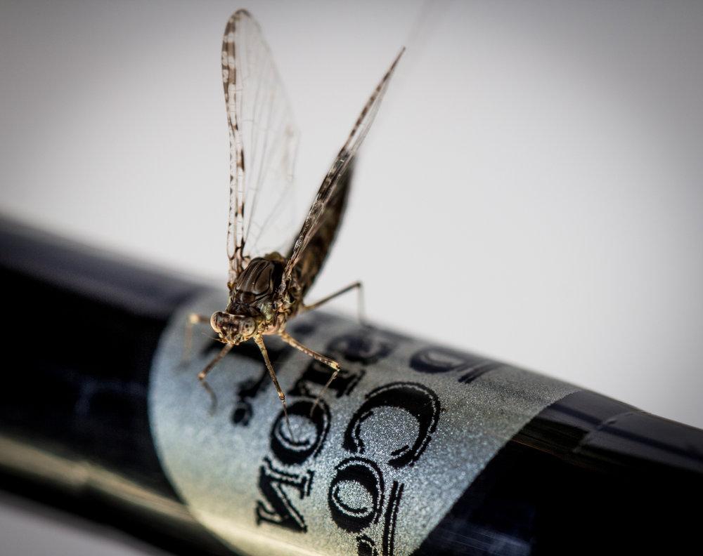 Baetis Mayfly Adult Spinner