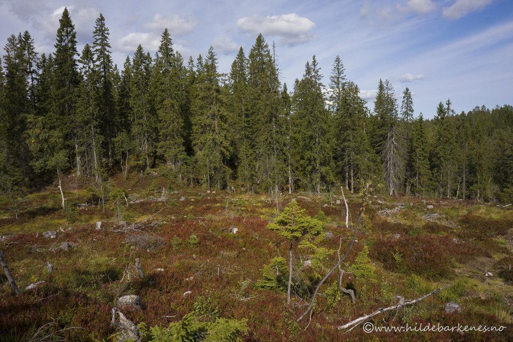 Varme høstfarger og åpent landskap på Skimtheia