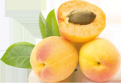 Albicocche - Descrizione: L'albicocca è il frutto dell'albicocco. È un frutto estivo ottimo per la salute del corpo e della pelle, altamente digeribile, ipocalorico e con un indice di sazietà notevole. Ha una dimensione tra i 3,5 e i 6 cm, un colore giallo uovo-arancio a seconda della varietà con lievi sfumature rosse e una buccia leggermente vellutata e polpa carnosa.Stagionalità: Estate. Le albicocche necessitano di un periodo dai 3 ai 6 mesi per svilupparsi e maturare e sono prevalentemente raccolte a mano dai primi di maggio alla metà di luglioProprietà: L'albicocca è tra i frutti che contengono le dosi più elevate di potassio e carotene; il carotene è una sostanza molto importante, utilizzata dall'organismo per la produzione di vitamina A. Inoltre l'albicocca è ricca di vitamina A, B, C e PP e di diversi oligoelementi (come magnesio, fosforo, ferro ecc.). Due etti di albicocche fresche forniscono il 100% del fabbisogno di vitamina A di un adulto, ideale per chi ha carenza di questa vitamina con conseguenti malattie degli occhi, della pelle, gastrointestinali. Prevengono la formazione di radicali liberi, aumentano le difese immunitarie, stimolano l'appetito, sono utili in caso di anemia, spossatezza, depressione. Il frutto fresco è astringente, mentre se essiccato è lassativo.