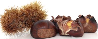 Castagne - Descrizione: Frutto atipico, poiché ricco di carboidrati complessi come i cereali, la castagna è il frutto di un albero caratteristico dei boschi di mezza montagna. Per secoli le castagne hanno rappresentato la principale fonte alimentare delle popolazioni montane durante l'autunno e l'inverno, dette per questo anche