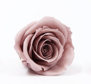 Here You Will Find Our Rose Color Palette Red Roses Official