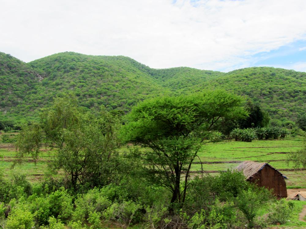Landscape2.jpg