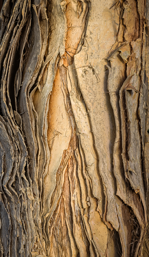 Stephen Sherrill,  Paper Bark Tree