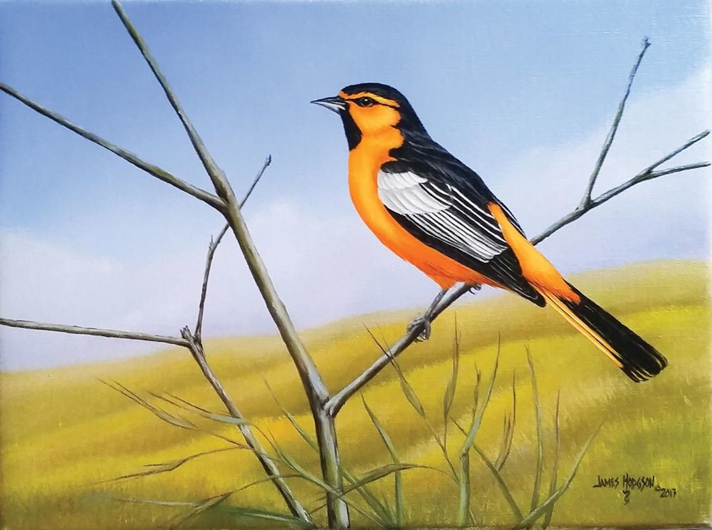 Jim Hodgson, Bullock's Oriole, oil on linen