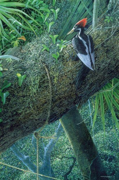 Strange Fruit--Ivory-Billed Woodpecker (2002)