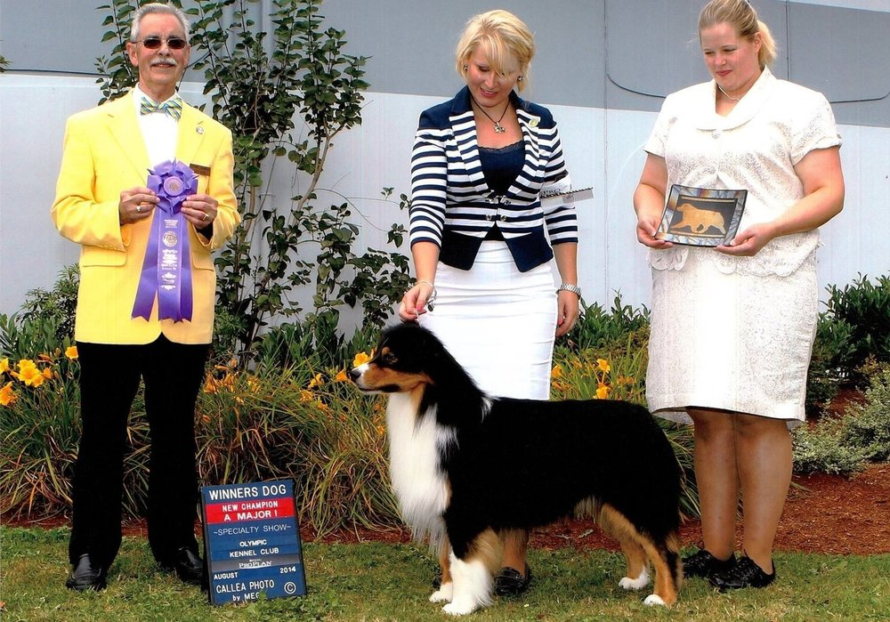 Diesel - AKC/ASCA CH Witsend's Running On EmptySire: HOF GCH Hearthside's Nothing To LoseDam: Witsend Goldcrest Mere WhimsyHips: OFA Good, Elbows NormalFull Detention/Scissor's biteMDR1: n/nCEA: n/nHC: n/nPHA: negativeEye's Cleared Annually, no notationsD/DNot red factored