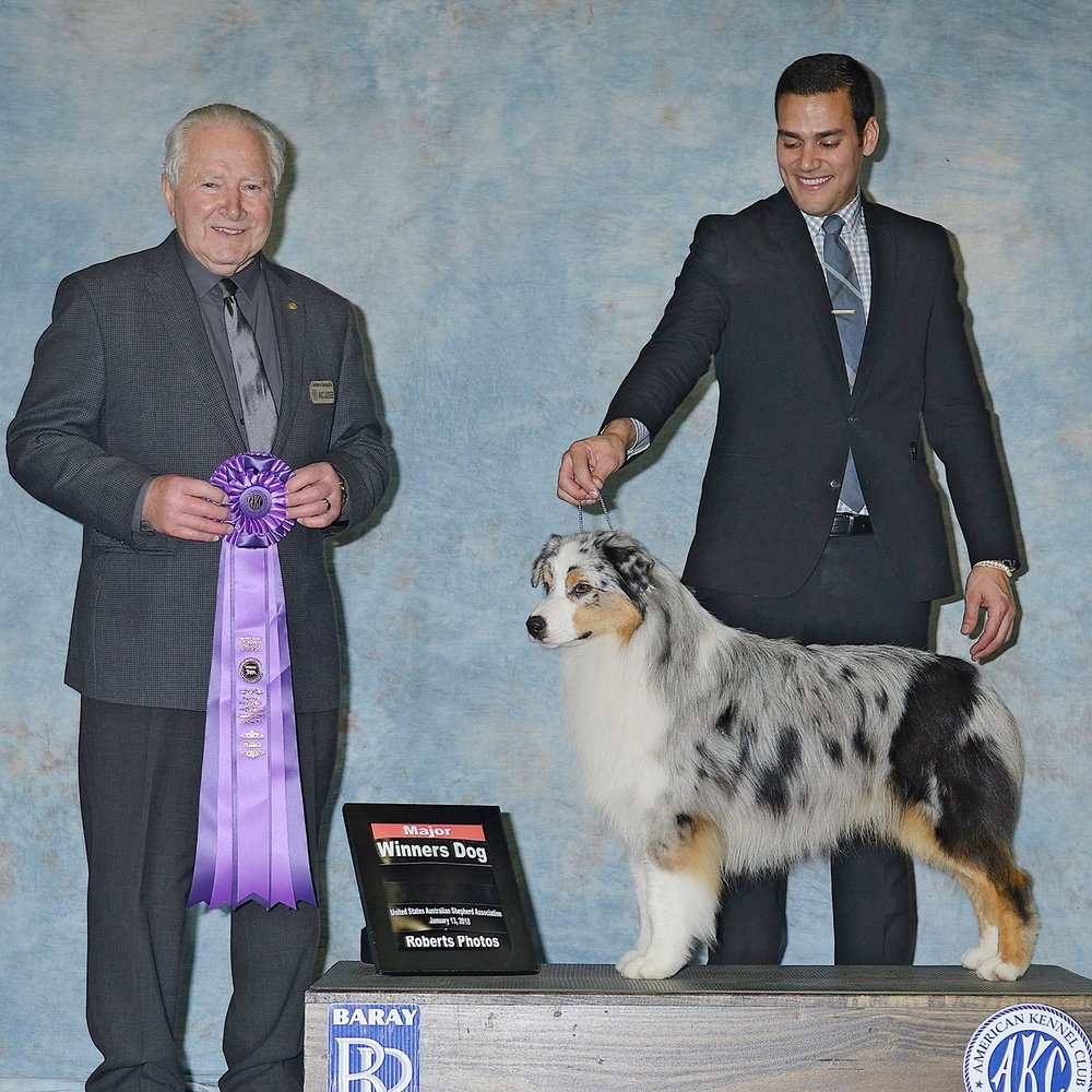 USAA Specialty Winner's Dog at 20 Months! ..like father, like son! -