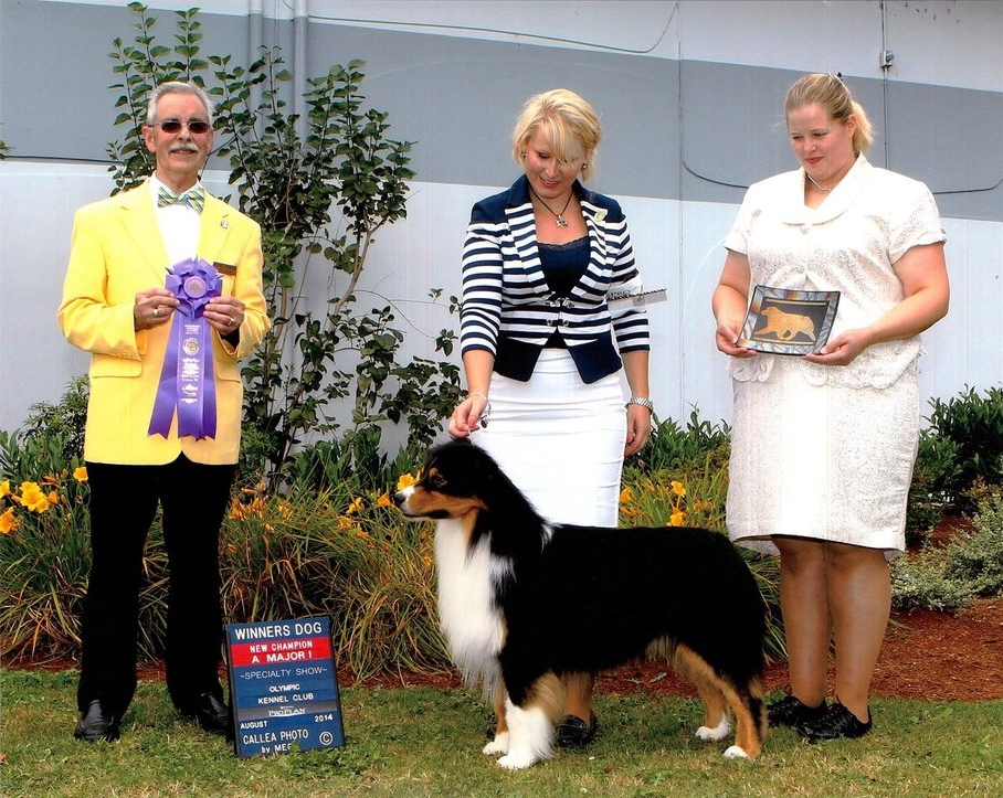 Winner's Dog, National Specialty 2014. -