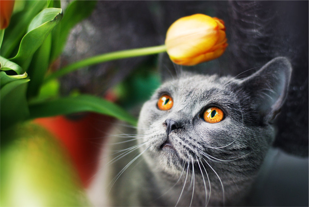 How to Keep Your Cat Safe From Poison