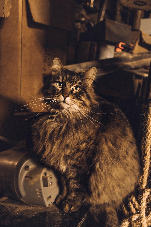 general_store_cat.jpg