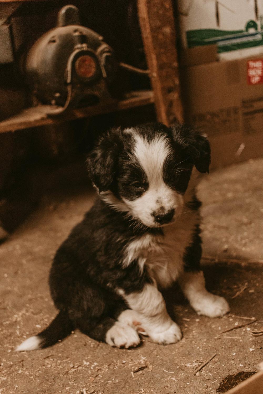 general_store_puppies4.jpg