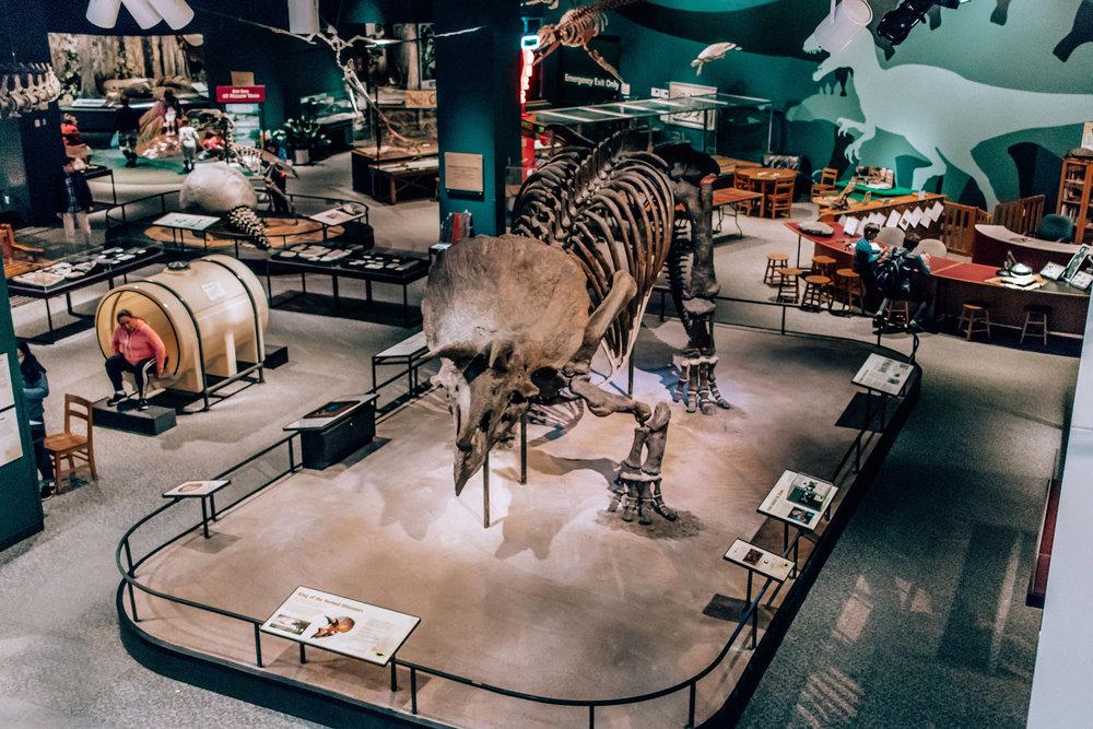science_museum_dino.jpg