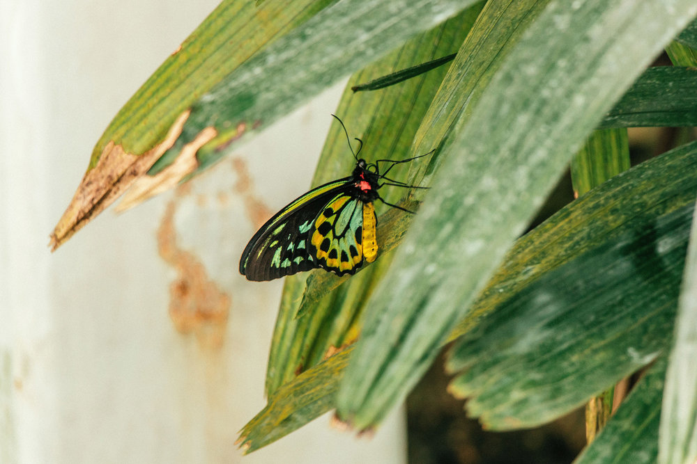 butterfly_house_4.jpg